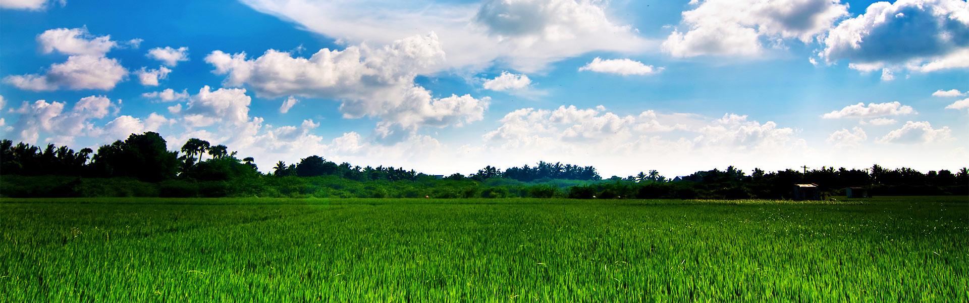 Riso-jolanda-Produzione-vendita-riso-carnaroli-arborio-vialone-integrale-farina-di-riso-semola-di-riso
